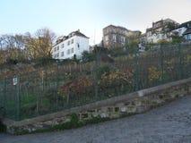 Vignoble dans Montmartre photo libre de droits