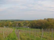 Vignoble dans Norhtern Allemagne Photo stock