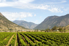 Vignoble de Canada de Colombie-Britannique de Lillooet Photos stock