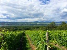 Vignoble de Canada du Québec de voyage Images libres de droits