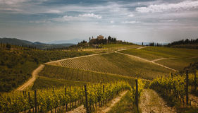 Vignoble de chianti Photo stock