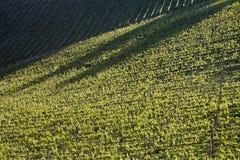 Vignoble de chianti avec la lumière oblique photographie stock