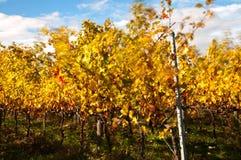 Vignoble de chianti en automne images stock