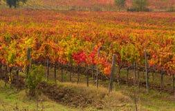 Vignoble de l'Ombrie photos libres de droits