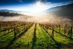 Vignoble de la Toscane Images libres de droits