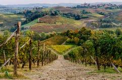 Vignoble de Langhe en automne Photo libre de droits