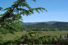 Vignoble de Nappa Images libres de droits