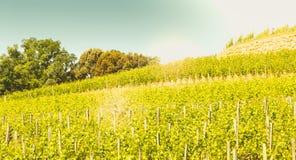 Vignoble de Saint Emilion, France, près de Bordeaux à la fin de s Images stock