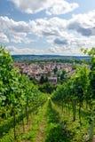 Vignoble de Stuttgart Images libres de droits