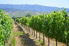 Vignoble de vallée de Casablanca photo stock