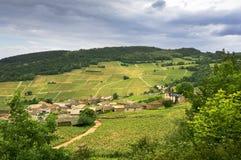 Vignoble de village de Solutré, la Bourgogne, France Photographie stock libre de droits
