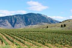 Vignoble en Colombie-Britannique centrale Photographie stock