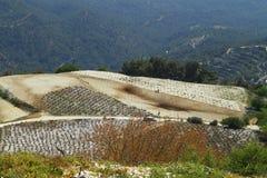 Vignoble en terrasse Photos stock