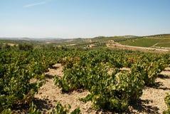 Vignoble espagnol, Montilla image stock