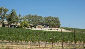 Vignoble et établissement vinicole dans la zone rurale photographie stock libre de droits
