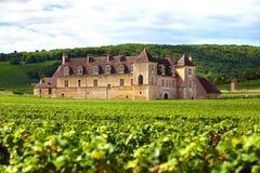 Vignoble et château français typiques, France Photographie stock libre de droits