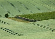 Vignoble et champ Image libre de droits