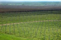 Vignoble et champ de pommiers Photographie stock