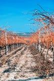Vignoble et collines, Chalkidiki photographie stock libre de droits