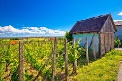 Vignoble et cottage traditionnels dans Vrbovec Photographie stock libre de droits