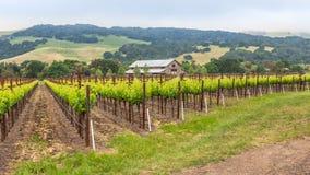 Vignoble et grange de la Californie du nord image stock