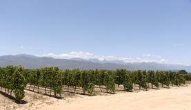 Vignoble et montagnes de Paarl le Cap-Occidental Afrique du Sud images stock