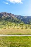 Vignoble et montagnes du Nouvelle-Zélande Image stock