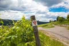 Vignoble et vignes en début de l'été, vignoble royal image stock