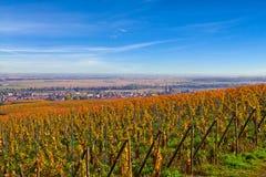 Vignoble français Image libre de droits
