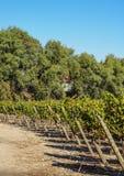 Vignoble près de Santiago de Chile Photographie stock libre de droits