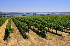 Vignoble près des rivages du fleuve Columbia Images libres de droits