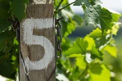Vignoble - rangée numéro cinq de détail Photo libre de droits
