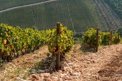 Vignoble sur la montagne Photographie stock