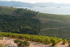 Vignoble sur la montagne Image libre de droits