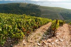 Vignoble sur la montagne Image stock