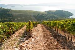 Vignoble sur la montagne Images stock