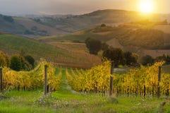 Vignoble sur le coucher du soleil photos stock