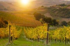 Vignoble sur le coucher du soleil images libres de droits