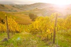 Vignoble sur le coucher du soleil photo stock