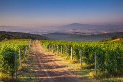 Vignoble Toscane, Italie de chianti images stock