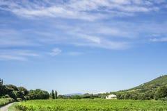Vignoble vert et une maison près de la montagne sous la petite vague de beaux nuages pelucheux blancs et de ciel bleu vif en été photos libres de droits