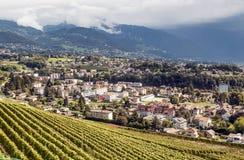 Vignobles à Geneve Images libres de droits