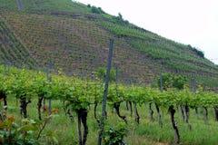 Vignobles à la vallée de la Moselle, images libres de droits