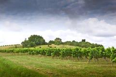 Vignobles Photographie stock libre de droits