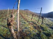 Vignobles allemands glacials et congelés Photo libre de droits