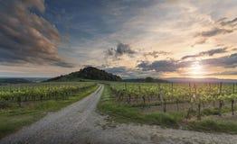 Vignobles au coucher du soleil 2 Photo libre de droits
