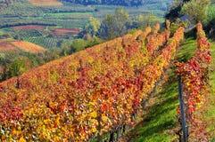 Vignobles automnaux sur les collines dans Piémont, Italie. photo libre de droits