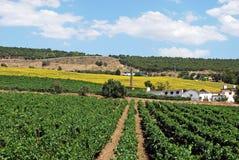 Vignobles, Andalousie, Espagne. photographie stock libre de droits