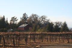 Vignobles avec la grange rouge Photo stock