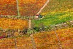 Vignobles colorés sur les collines dans Piémont, Italie Photographie stock libre de droits